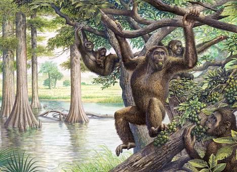Taiteilijan näkemys kadonneesta dryopithecus-apinasta, joka eli mioseenikaudella.