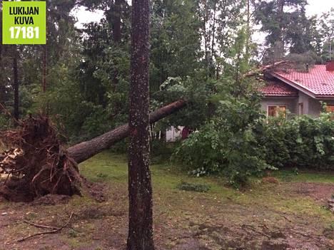 Puu kaatui talon päälle Kannelmäessä.