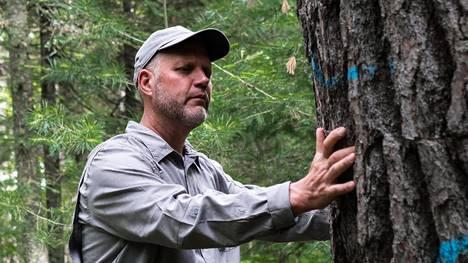 John Rajala 160 vuotta vanhan strobusmännyn juurella. Puuhun on pari vuotta sitten kirjoitettu rungon paksuus: 37 tuumaa.
