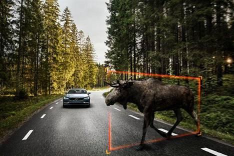 Volvon uusi auto tunnistaa eläimiä ja varoittaa niistä kuljettajaa.