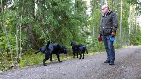 Espoolainen Jari Petsola ulkoilutti labradorinnoutajiaan Eetua ja Perroa Espoon Kolmirannassa.