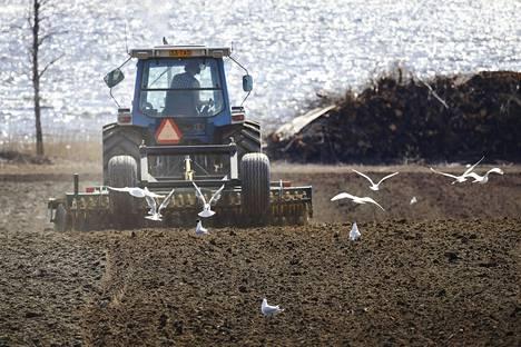 Maanviljelijä Pekka Parviainen viettää hellepäivät peltotöissä Juhukkalan tilalla Kuopion Riistavedellä. Traktorin kopissa kuulemma tarkenee.