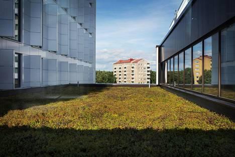 HUS:n laboratorioiden kattoa peittää maksaruohomatto.