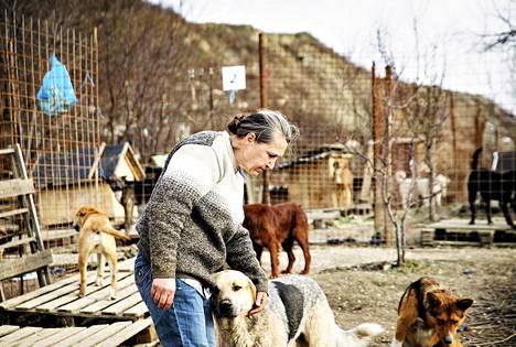 Vapaaehtoinen Nina Stojanovski huolehtii hylätyistä koirista Sotšissa.