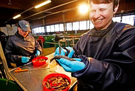 Kalastusmestari Päivi Anttonen ja kalanviljelijä Juha Hänninen leikkaavat pieniltä meritaimenilta rasvaevät kalanviljelylaitoksella Laukaassa. Talven urakka on 20 000–40 000 meri-, puro- ja jokitaimenta.