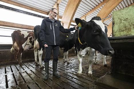 Henri Lamberg omistaa oululaisen maitotilansa yhdessä poikansa kanssa.