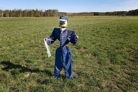Hanhenpelätin pellolla Kiteellä.