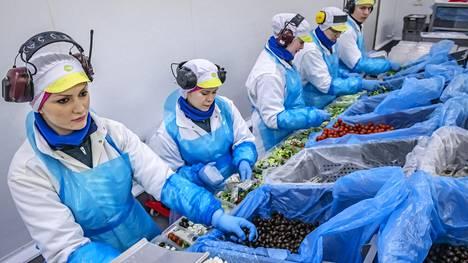 Shpresa Ibrahimi (vas.), Mia Strand, Carina Esberg, Susanna Westerlund ja Jimmy Öst työskentelevät Fresh Servant -yrityksen pakkaamossa Pedersöressä.