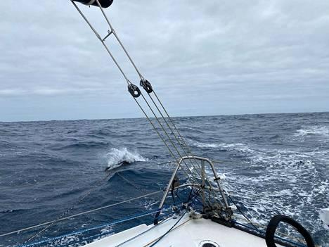 Tiimalasidelfiini seurasi Ari Huuselan venettä uutenavuotena.