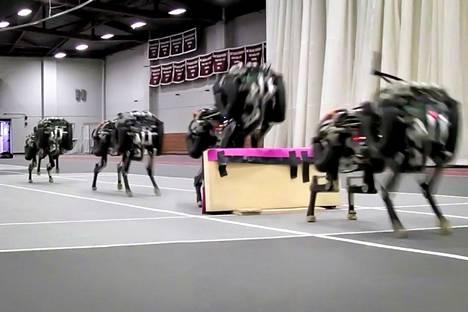 Robottikoira osaa jo estejuoksua.