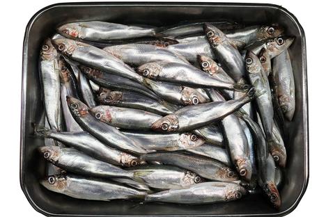 Keskivertosuomalainen syö 0,3 kiloa silakkaa vuodessa.