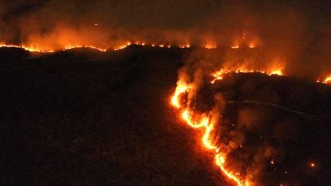 Palot Amazonin sademetsissä ovat olleet laajoja. Tuli oli irti 17. elokuuta esimerkiksi Tocantinsin osavaltiossa Brasilian keskiosissa.