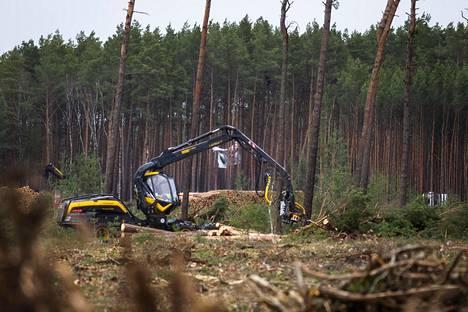 Metsäkoneet kaatavat puita tulevan Tesla-tehtaan tontilla Grünheidessa, Berliinin lähellä. Keskellä kuvaa näkyy puihin kiivenneiden aktivistien lakanat. Aktivistit yrittävät pysäyttää tehtaan rakentamisen.