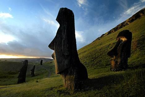 Kivisiä moai-patsaita.