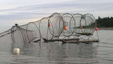 Kalastaja Mikael Lindholmin rysä katosi viime viikon torstai-iltapäivänä.
