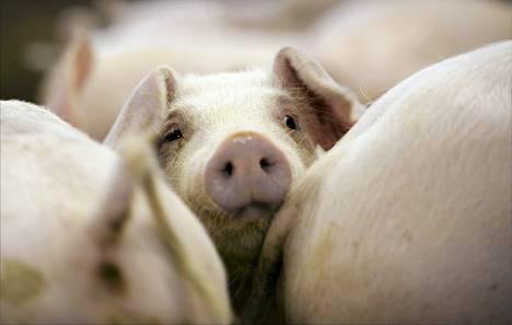 Etelä-Suomen sika- ja siipikarjasektorille ja kasvihuoneille maksettaisiin edelleen kansallisia tukia.