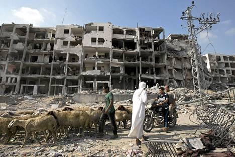 Mies johti lammaslaumaa tuhoutuneiden rakennusten ohi Gazan pohjoisosissa.