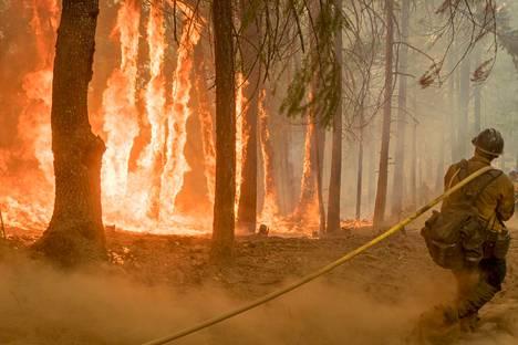 Metsäpalot riehuivat elokuussa Kaliforniassa kuten monena aiempanakin kesänä. Tutkijoiden mukaan metsäpalot yleistyvät, kun ilmasto lämpenee.