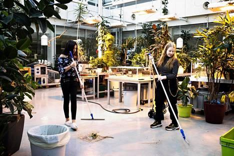 Faryal Ahmad ja Saara Rahijärvi siivoavat kasvihuoneen lattiaa. Eläinkerholaiset oppivat biologiaa, mutta he myös tekevät lujasti töitä hoidokkiensa hyvinvoinnin eteen.