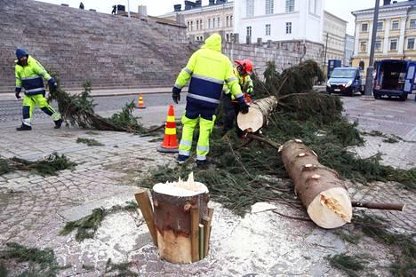 Reijo Åkerlund sahaa kuusesta oksia pois.