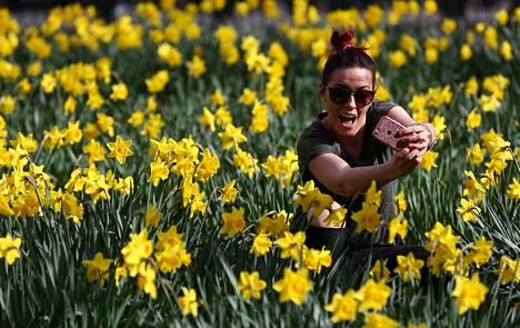 Kevät on koittanut Lontooseen. Nainen kuvaa itseään narsissien keskellä St. Jamesin puistossa lauantaina.