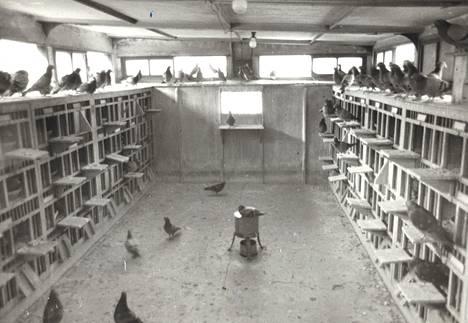 Kyyhkystenhoitaja Takeichi esitti mahtiaan loihtien taivaalla lennelleet parisataa lintua tähän huoneeseen noin kahdessa minuutissa yhdellä ainoalla hiljaisella vihellyksellä.