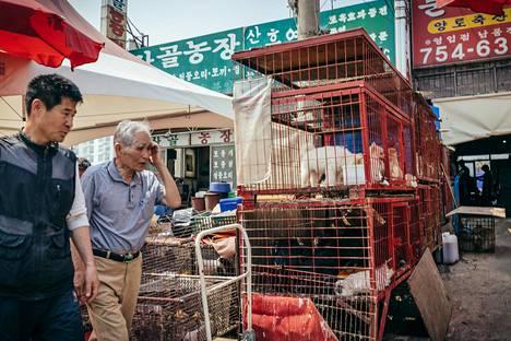Moran Marketilla Etelä-Korean Seongnamissa myydään koiria ruoan lisäksi myös lemmikeiksi.