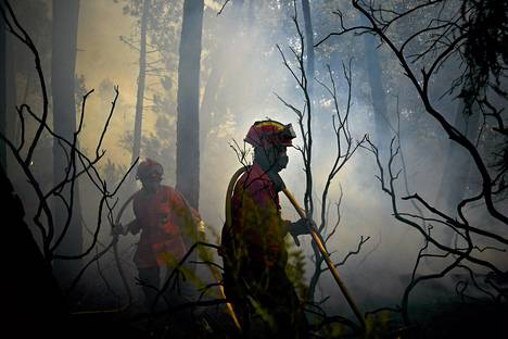 Palomiehet sammuttamassa maastopaloa Caramulossa Portugalissa.