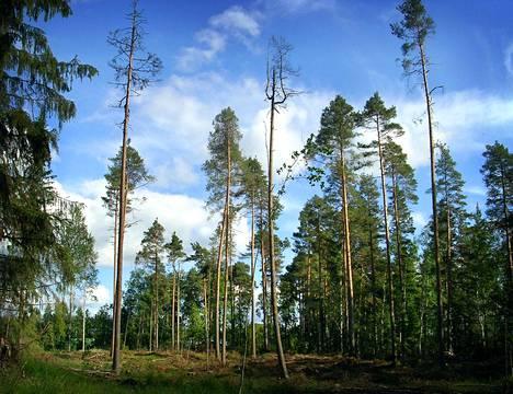 32 kuntaa haki metsäyhtiöiltä Stora Ensolta, UPM:ltä ja Metsä Groupilta alkujaan noin kuuden miljoonan euron korvauksia.