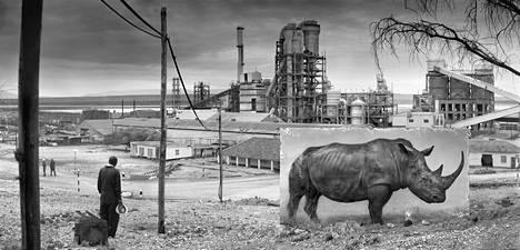 Sarvikuono keskellä teollisuusaluetta teoksessa Factory with rhino, 2014