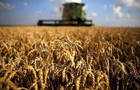 Leikkuupuimuri korjaa vehnäsatoa Dixonissa, Illinoisissa kesäkuun puolivälissä. Ruokaa on maailmassa kaikille, ja tulevillekin polville.