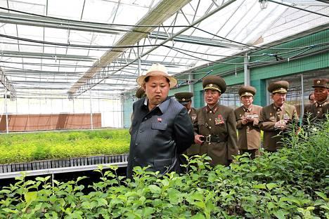 Pohjois-Korean propagandassa kuivuus ei näy. Lauantaina maan valtiollinen uutistoimisto julkaisi kuvan diktaattori Kim Jong-unista paikallisella metsänkasvatuslaitoksella.