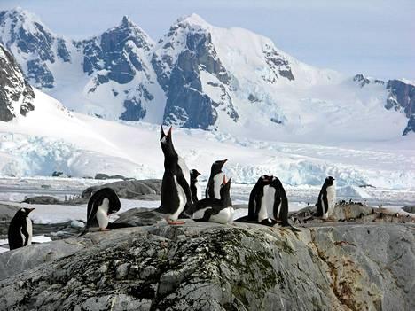 Painovoima on heikentynyt Etelämantereella, mutta se ei vaikuta alueen eläimistöön.