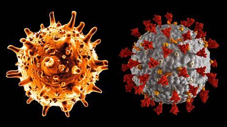 SARS-virus (vas.) on parhaillaan käynnissä olevan pandemian aiheuttaneen koronaviruksen (oik.) sukulainen.
