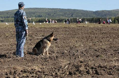 Vanginvartija seurasi koiran kanssa vankien työskentelyä vankileirin perunapellolla siperialaisen Krasnojarskin lähistöllä syyskuussa 2012.