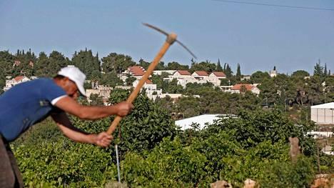 Palestiinalainen maanviljelijä Khirbet Zakariahin kylässä. Taustalla näkyy israelilainen siirtokunta.