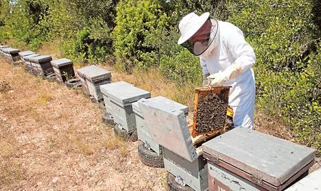 Sähköasentajana työskennellyt Eduardo Dolz muutti maalaiskylään Katalonian maaseudulle ja ryhtyi hunajantuottajaksi.
