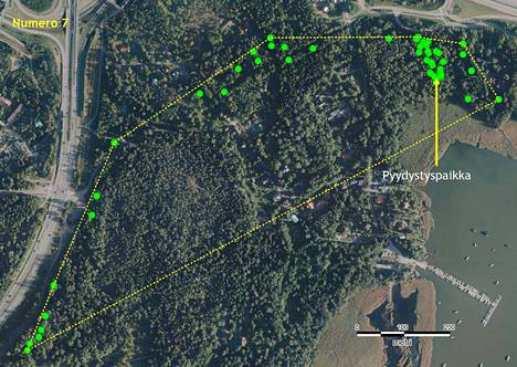 Liito-oravasta tehtyjä havaintoja Ruukinrannassa. Vihreät pallot osoittavat kohtia, joihin liito-orava on seurannan aikana paikannettu.