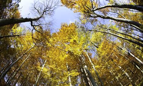 Evoluution näkökulmasta metsä on taistelutanner: kasvit kamppailevat elintilasta maan päällä ja alla.