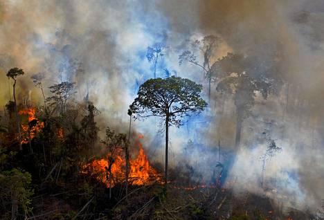 Amazonin sademetsän tuhoutuminen on kiihtynyt presidentti Jair Bolsonaron kaudella.