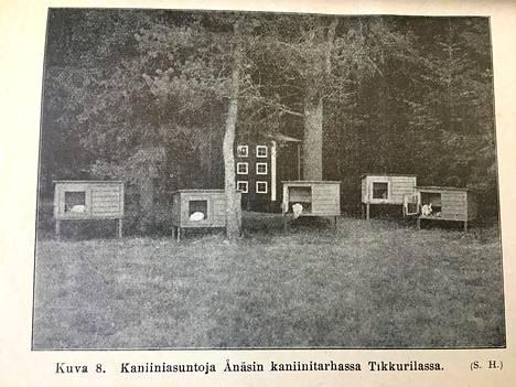 Kaniinien asuntoja Lauri Kristian Relanderin omistamassa Ånäsin kaniinitarhassa Jokiniemessä. Kuva on otettu Relanderin kirjoittamasta Kaniininhoidosta-kirjasta.
