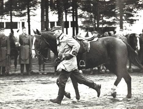 Armeijan hevoskanta vähenee määrärahojen niukkuuden vuoksi huolestuttavasti. Varusmies juoksuttamassa hevosta, yhtä seitsemästä sadasta.