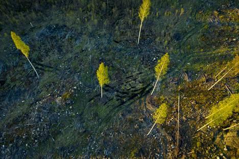 Hakkuuaukio Sipoossa. Iso osa ihmisen aiheuttamista päästöistä on IPCC:n raportin mukaan peräisin metsätaloudesta.