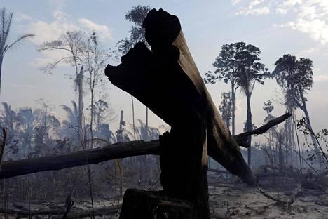 Metsäpalot riehuivat Rondônian osavaltiossa Brasiliassa syyskuussa 2019.