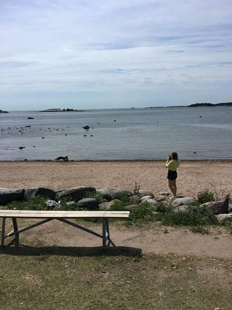 Monet rannalla olevista nuorista lapsista kuvasivat kettua, joka juoksi saalis suussaan. Ketun hyökkäyksestä selviytyneet hanhet pakenivat mereen.
