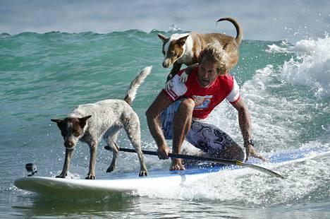 Australialainen koirien kouluttaja ja entinen ammattisurffaaja Chris de Aboitiz tempuli Millie (vas.) ja Rama -koirien kanssa aalloilla.
