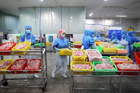 Työntekijät käsittelivät kalafileitä tehdashallissa Wenchangissa Hainan maakunnassa. Kiinassa kalatalouden tuotanto on peräti kolminkertaistunut kahden viime vuosikymmenen aikana.