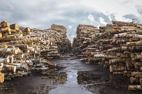 Metsäyhtiöillä menee yhä kohtuullisen hyvin.