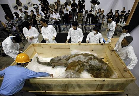 39 000 vuotta vanhaa Siperiasta löydettyä mammuttia purettiin matka-arkusta Yokohamassa tiistaina. Mammutti tulee esille näyttelyyn heinäkuusta syyskuun puoliväliin.