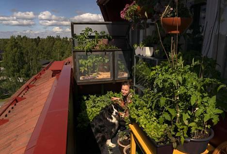 Allu-koira on Sirja Eskelisen mukaan jättänyt parvekkeen kasvit pääasiassa rauhaan.